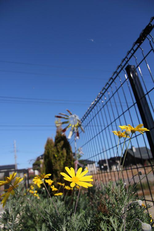 青空と黄色い花